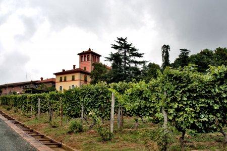 Del Conca tile in the prestigious cellar La Scolca® 03 - Ceramica del Conca