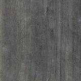 articoli - del Conca - orto%20botanico - Tacca%20Grigio
